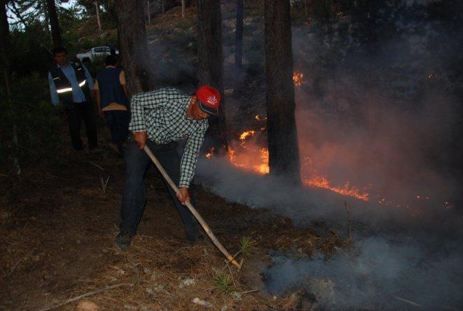 Aydın'daki Orman Yangını