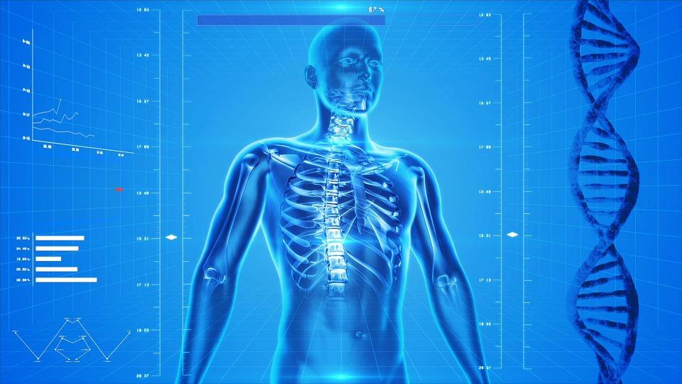 human-skeleton-163715-960-720.jpg